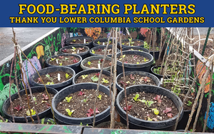 Food-bearing Container Gardens Available During Meal Distribution at Catlin Elementary
